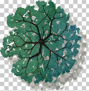 Tree Plan PNG