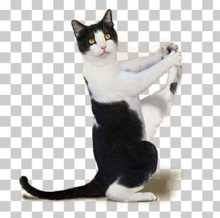 Yoga Cats: The Purrfect Workout Kitten Yoga Dogs PNG
