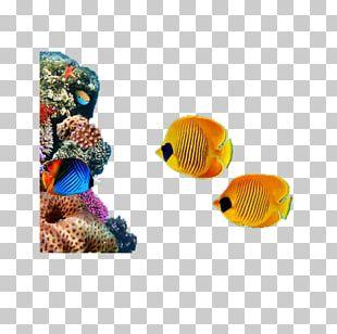 Coral Reef Sea Underwater Marine Biology Organism PNG