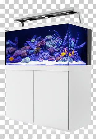 Reef Aquarium Light Coral Reef PNG