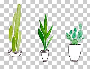 Watercolor Painting Drawing Cactaceae Succulent Plant PNG