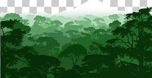 Forest Landscape PNG