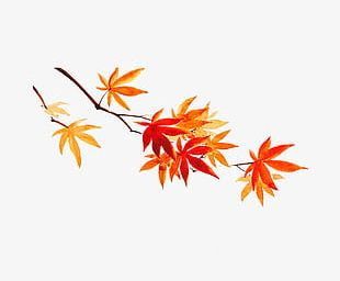 Maple Watercolor PNG