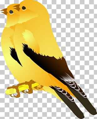 Finches Bird Graphics European Goldfinch PNG