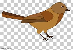 Raster Graphics Drawing House Sparrow PNG