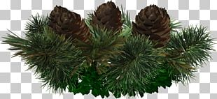 Spruce Pine Christmas Ornament Fir Tree PNG