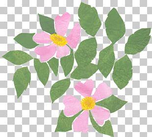 Floral Design Pink M Petal Annual Plant PNG