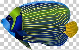 Papua New Guinea Underwater Ocean Fish Sea PNG