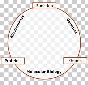 Molecular Biology Genetics Cell Biology Molecule PNG