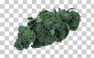 Medical Cannabis Adult Use Of Marijuana Act Legality Of Cannabis Cannabis Smoking PNG