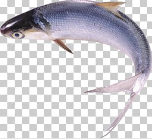 Milkfish Food Freshwater Fish PNG