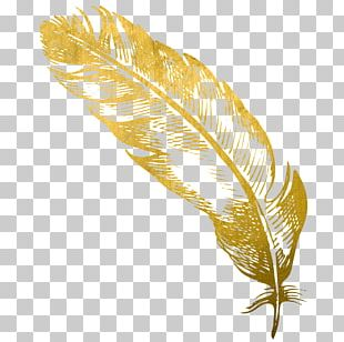 Feather Gold Quill Card Snobs PNG