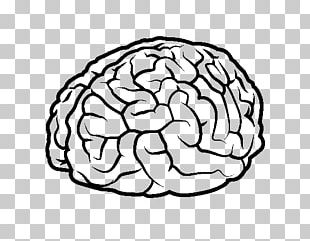 Drawing Human Brain Human Body PNG