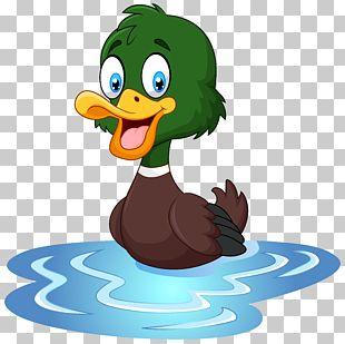 Duck T-shirt Cartoon Waterfowl Illustration PNG