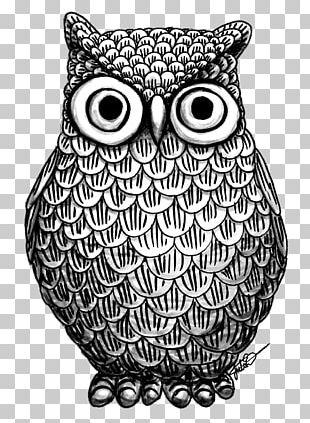 Owl Drawing Art Coloring Book PNG
