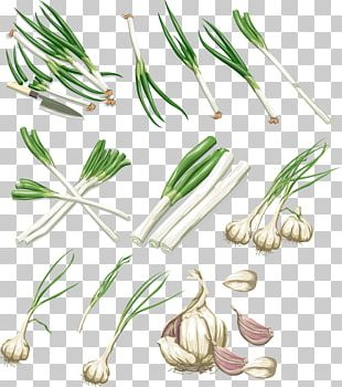 Vegetable Garlic Onion Allium Fistulosum PNG