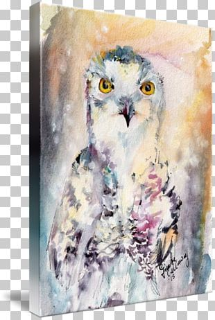 Owl Watercolor Painting Acrylic Paint PNG