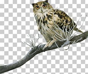 Great Grey Owl Bird Tawny Owl Scops Owl Little Owl PNG