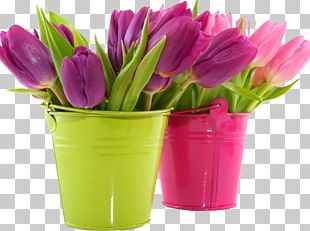 Tulip Desktop Flower Pink Purple PNG