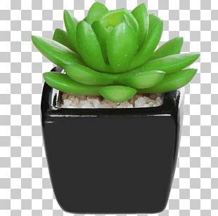 Artificial Flower Succulent Plant House Flowerpot PNG