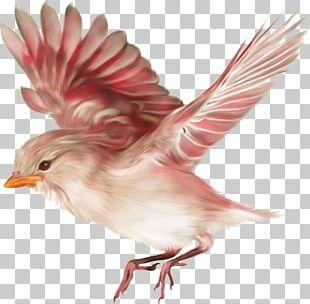 On The Origin Of Species Bird Browne PNG