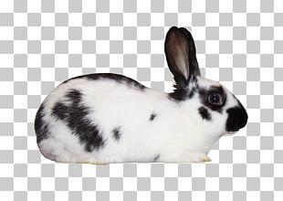 Domestic Rabbit White Rabbit European Rabbit Leporids Black And White PNG