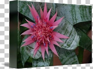 Flowering Plant Wildflower Annual Plant PNG