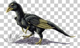 Bird Common Raven Beak Feather Vulture PNG