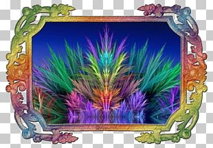 Frames Feather PNG