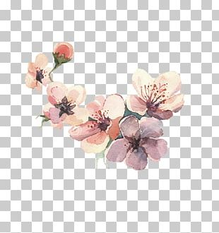 Flower Watercolor Painting Drawing PNG