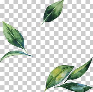 Leaf Flower Illustration PNG