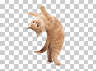Yoga Cats: The Purrfect Workout Yoga Kittens: Take Life One Pose At A Time Yoga Dogs PNG