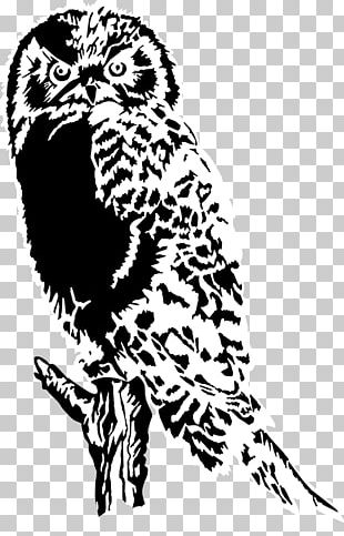 Owl Black And White Bird PNG