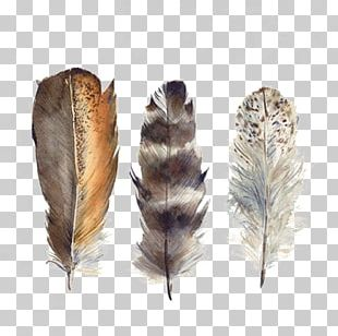 Bird Feather Drawing Watercolor Painting PNG