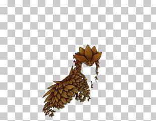 Pine Family Pinaceae PNG