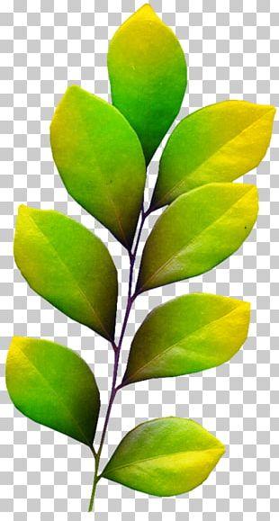 Leaf Internet Media Type Follaje PNG