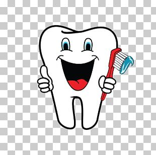 Human Tooth Dentistry PNG