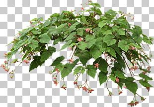 Hanging Basket Houseplant Flowerpot PNG