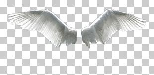 Wing Flight Aile PNG