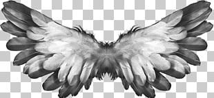 Angel Wings Feathers PNG