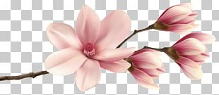 Southern Magnolia PNG