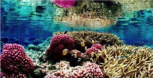 Great Barrier Reef Coral Reef Coral Bleaching Global Warming PNG