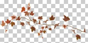 Autumn Leaf Color Autumn Leaf Color Desktop GIF PNG