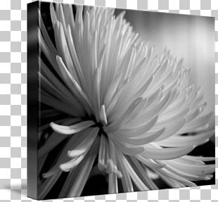Monochrome Photography Still Life Photography Flower PNG