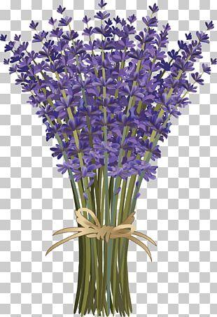 Lavandula Dentata French Lavender Flower Bouquet Botanical Illustration PNG