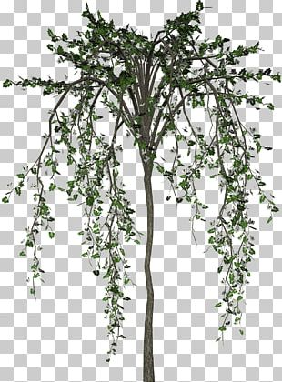 Tree Flower Plant PNG