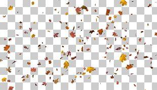 Autumn Leaf Color Layers PNG