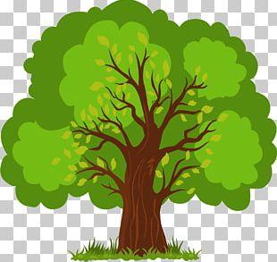 Euclidean Tree PNG