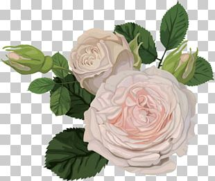 Garden Roses Flower China Rose Portable Network Graphics Floral Design PNG