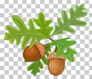 Acorn Autumn Leaf Color PNG